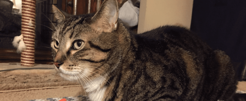 Best Cat Mom Ever Saves Her Kitty From Deadly Tumor