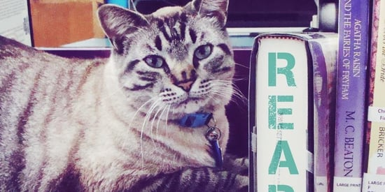 This Library Cat Was Fired, And It's Tearing His Town Apart