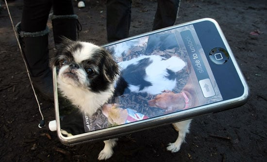 Do Tell: Pets Plus Tech Equals . . .