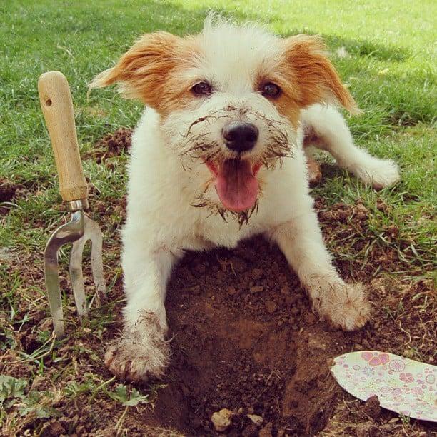 Digging Fun