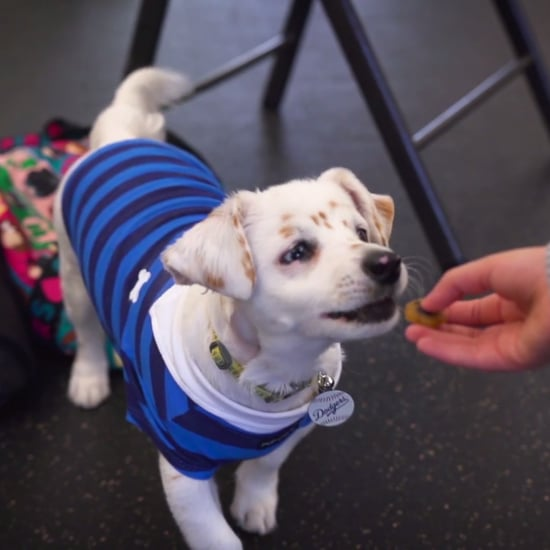 Deaf Rescue Puppy Learning Sign Language