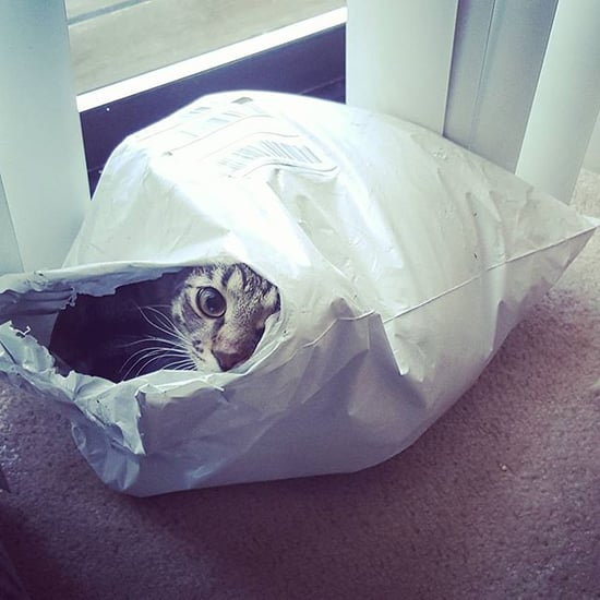 Cats Sitting Inside Things | If It Fits, I Sits