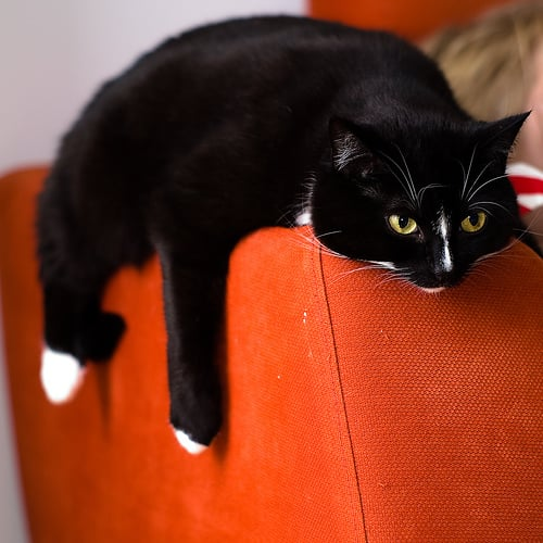 Do You Let Your Pets on Your Sofa?