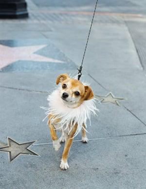 Oscar Gift Bag Goodies For Celeb Pets