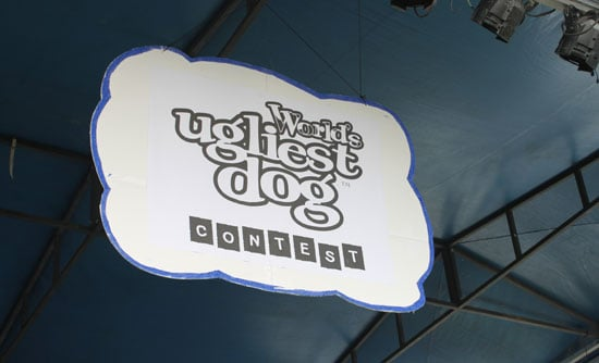 Photos and Fun from the 2009 World's Ugliest Dog Contest in Petaluma, California