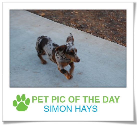 Pet Pics on PetSugar 2008-12-02 09:30:08