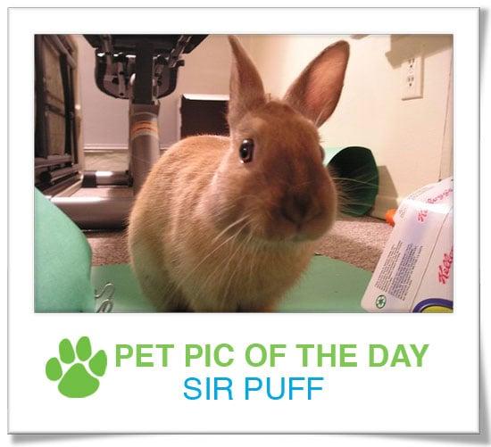 Pet Pics on PetSugar 2009-04-14 09:00:26
