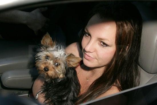 Britney Update: Music Video! No Rehab! Kevin's Eye!
