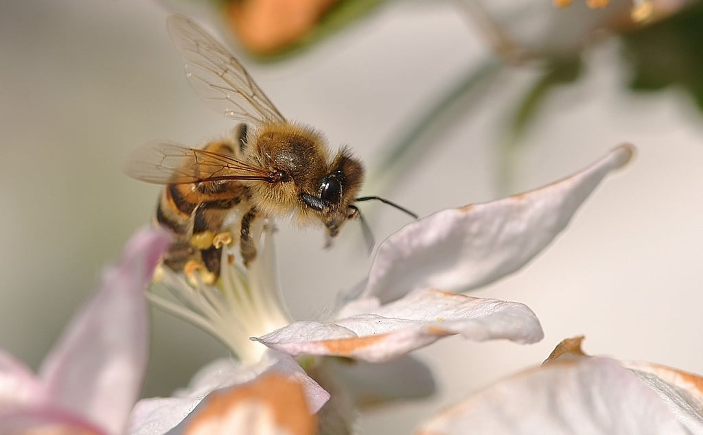 And Then There's the Bees