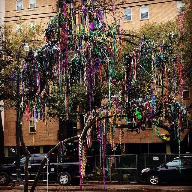 Meanwhile, the trees were decorated like it's Christmas.