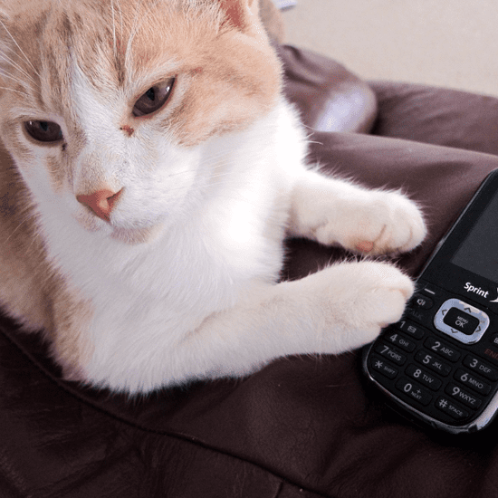 Free iPhone Apps For Pets