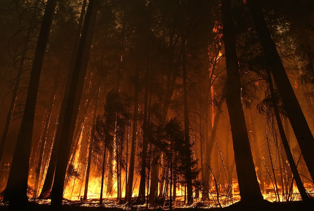 Fire consumed the trees near Yosemite National Park.