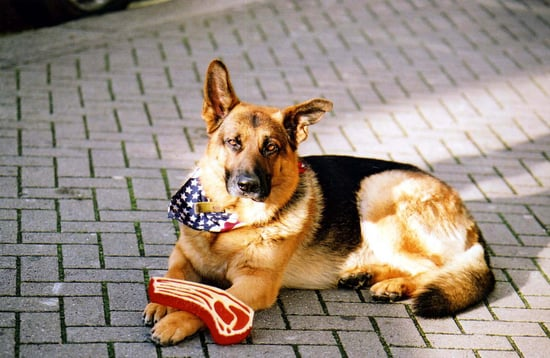 "Oscar, the ""Met Bar Dog"" Passes Away in London"
