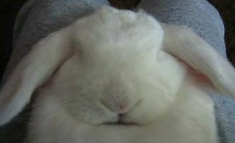 Bunny Asleep and Snoring