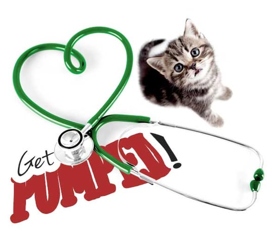 Get Pumped: 10 Veterinary Facts About the Feline Heart