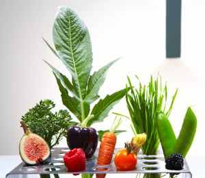 Do You Know Which Foods Are Richer in Antioxidants?