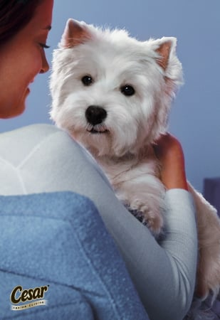 What Do You Cherish Most About Being With Your Companion?