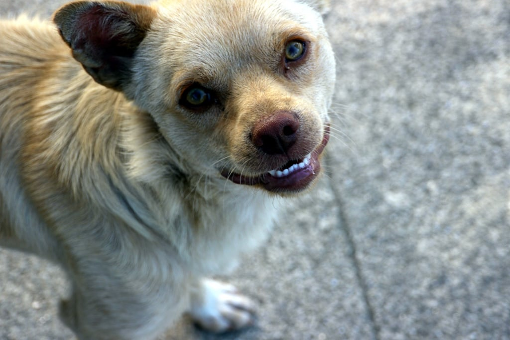 This pooch has lots to grin about. Source: Flickr user zebarnabe