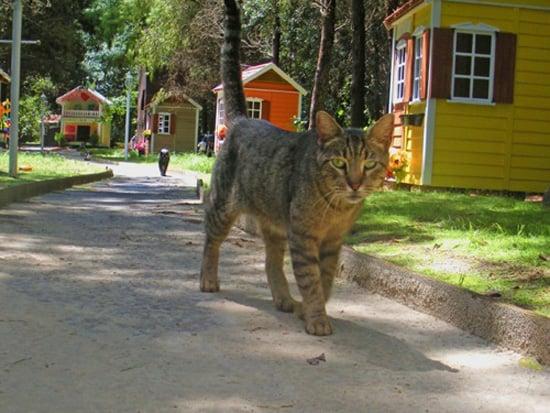 Homeless Cat Village