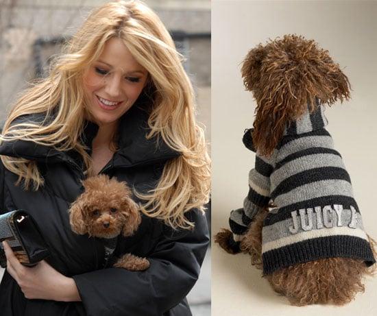 Sugar Shout Out: Juicy Pet Couture