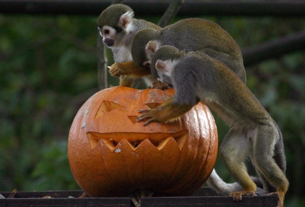 Bristol Zoo Celebrates Halloween
