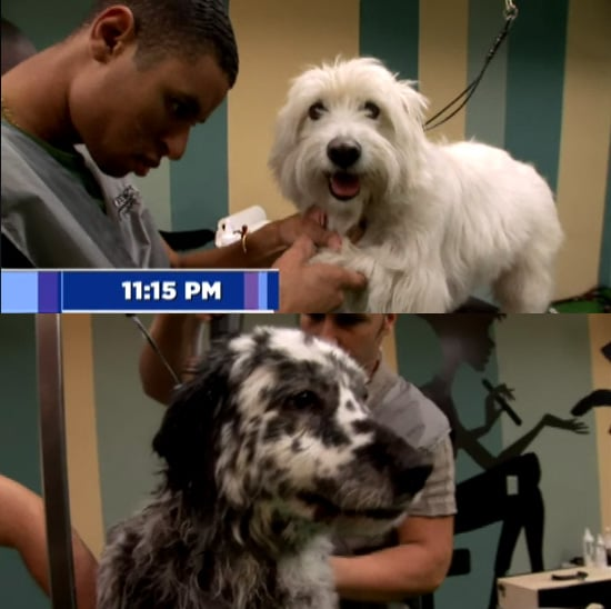 "The Season Finale of ""Groomer Has It"" on Animal Planet: Who Won?"