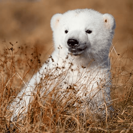 Siku the Polar Bear Summer Photos