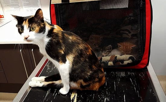 Abandoned, Beaten, Paralyzed, With Kittens: Princess Survives