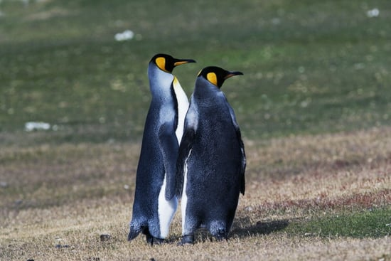 Pair Of Penguins Expelled From Breeding Program Because They're Gay