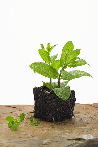 Don't Let Your Mint Go to Waste