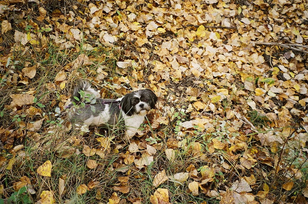 I've counted all the leaves . . . what now? Source: Flickr user Katie@!