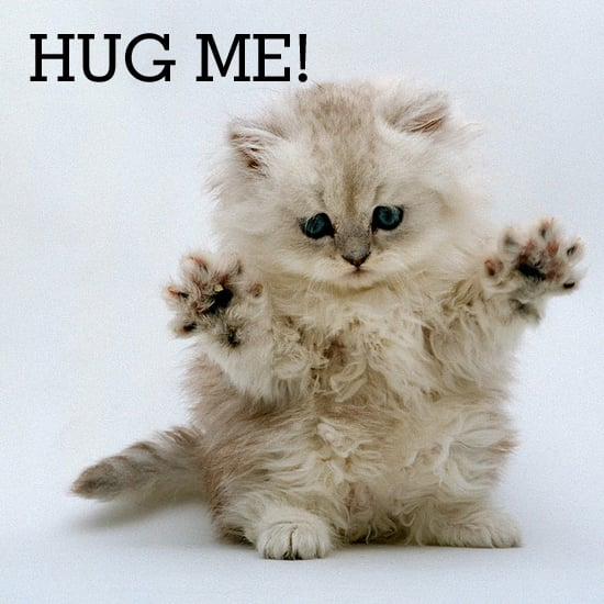 Don't Forget to Hug Your Cat!