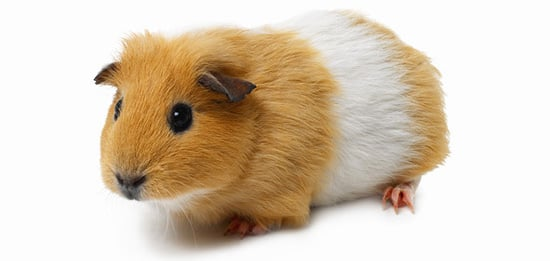 Have You Spayed or Neutered Exotic Pets?