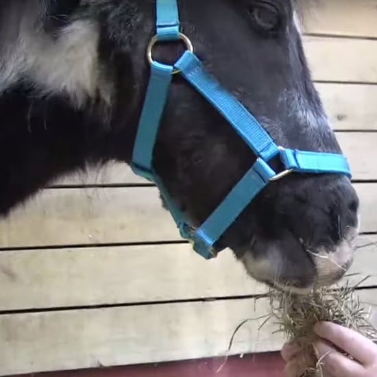 PETA Rescues Abandoned Pony