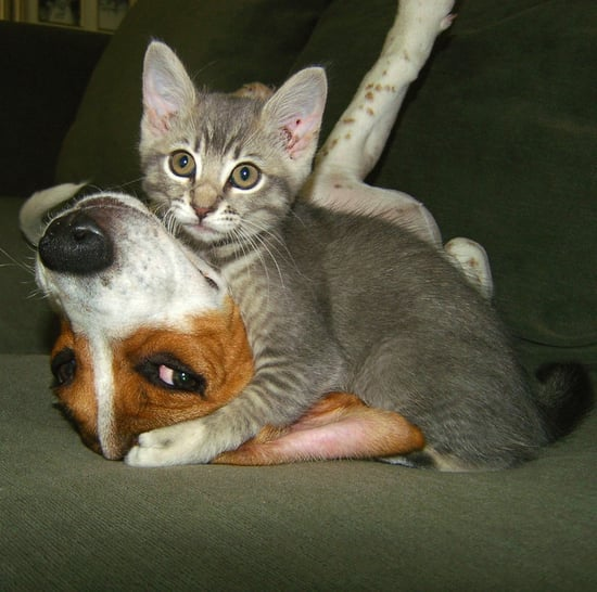 Interspecies Friendships | Pictures