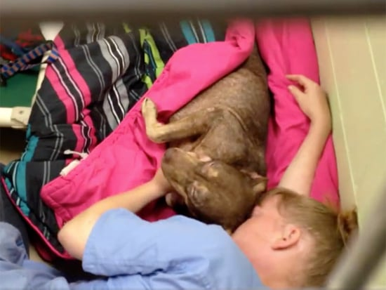 Shelter Worker Crawls into Cage and Comforts Abandoned Dog After Surgery