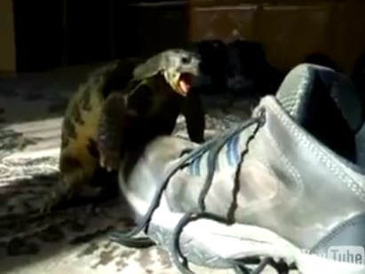 Shoe to Tiny Turtle: I'm Just Not That Into You