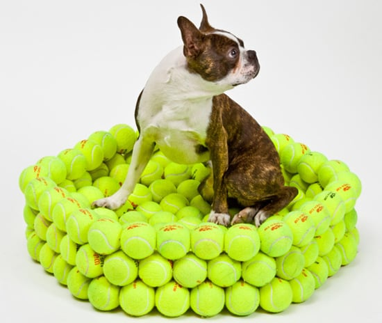 Dog Bed Made of Tennis Balls