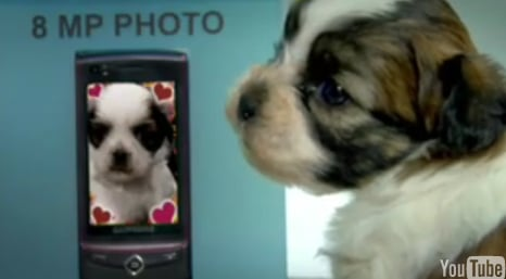 Cute Alert: Check Out the Puppy Photo Booth!
