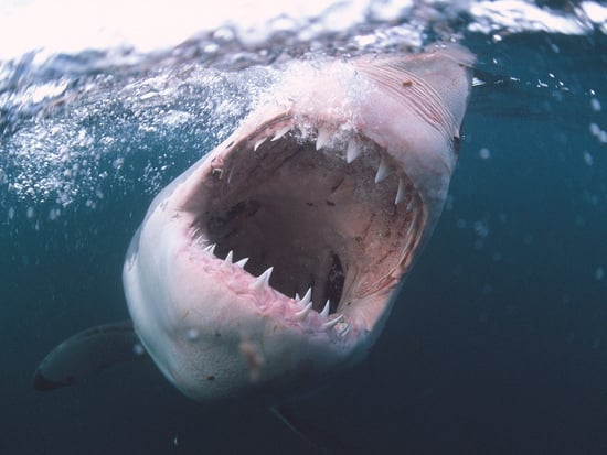 13-Year-Old Florida Boy Suffers 'Huge Gash' After Shark Attack: 'All You See Is Blood'