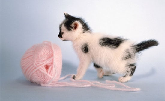 On the Ball Challenge: D.I.Y. Cat Toys