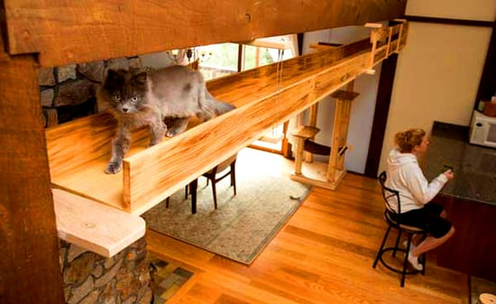 "Two Cat-Centric Home Design Firms Show Us How to ""Catify"""