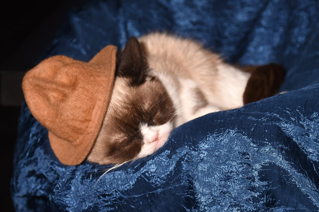 Conan called out Grumpy Cat, who was taking a snooze in Pharrell's hat.