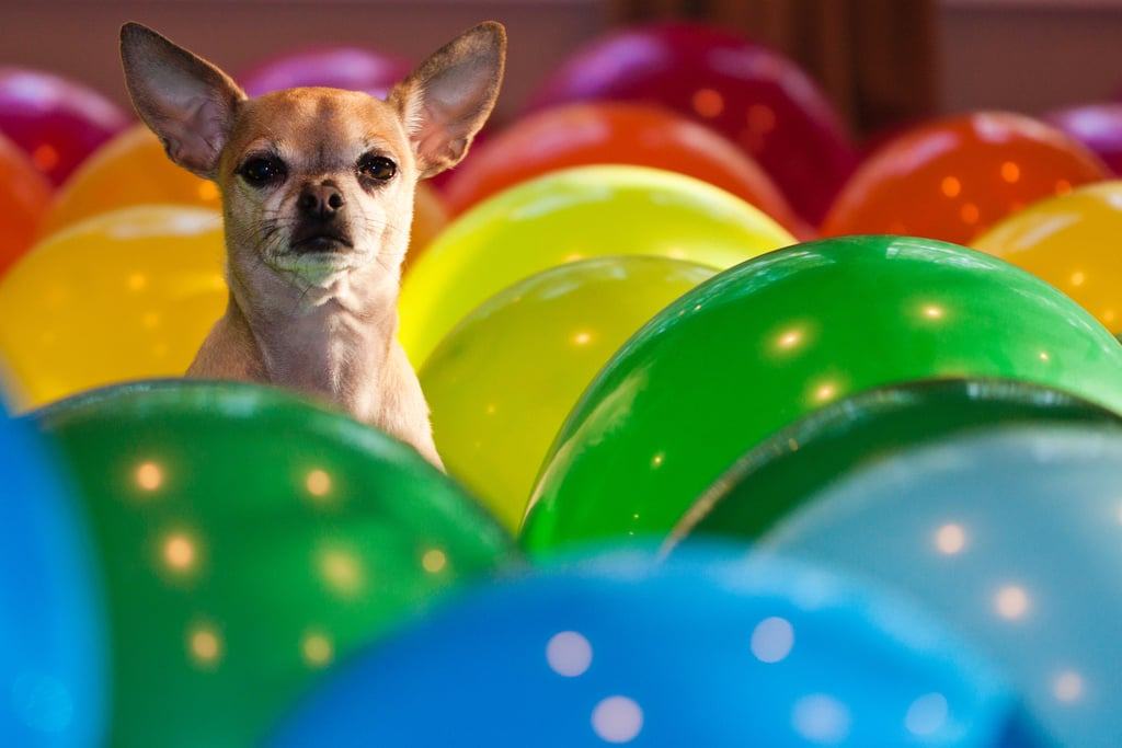 Did someone say birthday party? Source: Flickr user wsilver