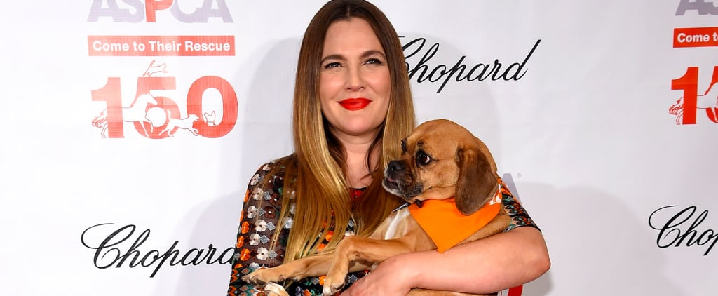 Drew Barrymore Cuddles With a Supercute Red Carpet Date Before Being Honored by the ASPCA