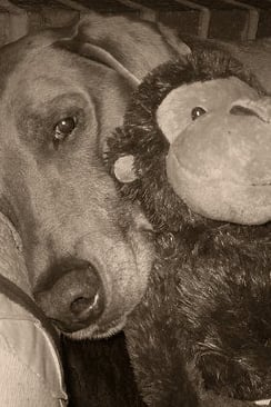 Pet Pic of the Day: Cuddles
