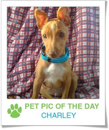 Pet Pics on PetSugar 2009-03-11 09:30:08