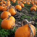 Ghost Pictures and History of Halloween and Jack-o'-Lanterns