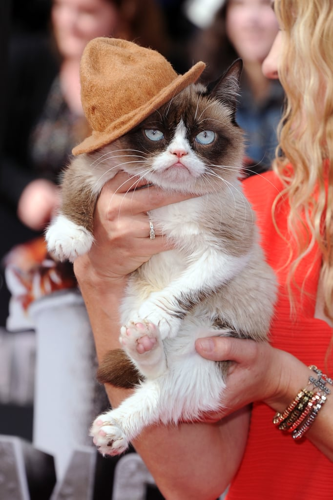 Watch Out, Pharrell, Grumpy Cat Has Got Your Hat