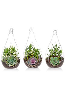 Succulent Terrarium Trio Kit